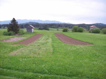 Weiden en lapjes bewerkte grond