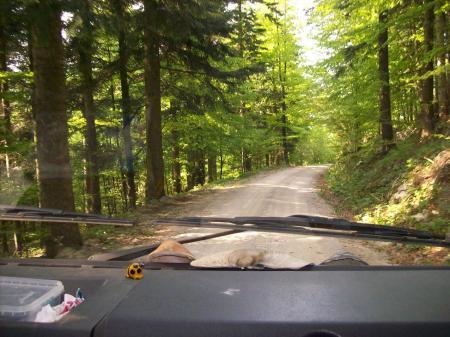 Bosweg naar Cerknica