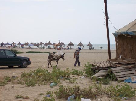 ezel op strand