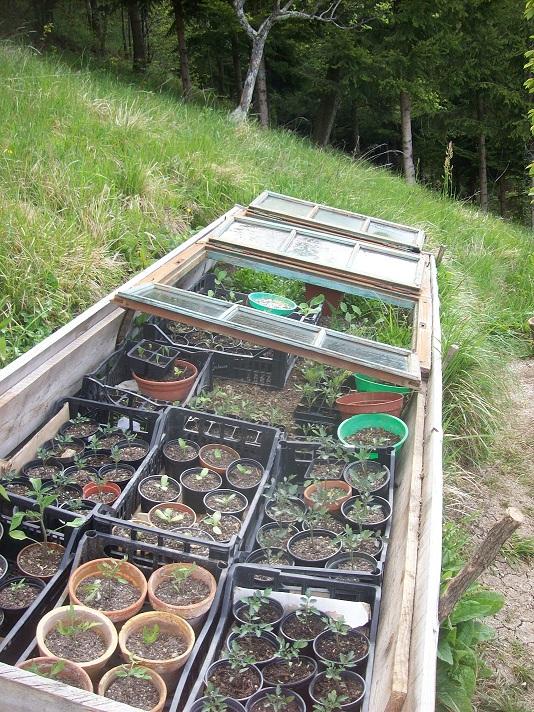 eigen opgekweekte plantjes in de zaaikas