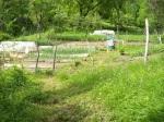 tuin nu: met moestuinen (foto), bankjes, terras, hangmat, ...