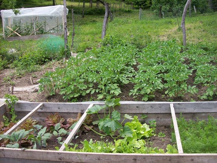 aardappel, wortel, koolrabi, selder, sla, erwtjes, ...