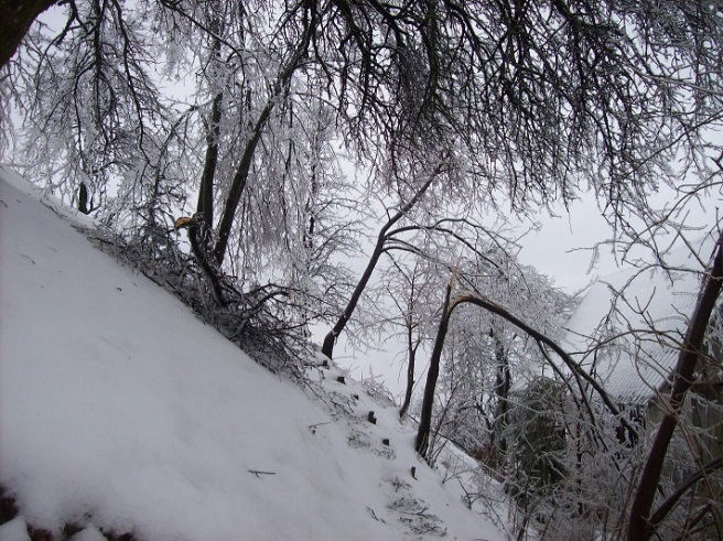 bomen ingepakt in ijs kraken door onder het gewicht