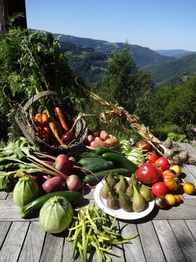 Een overvloed aan zongerijpte groenten & fruit
